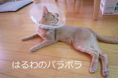 2011_08_02.jpg