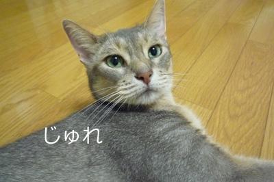 2011_08_04.jpg