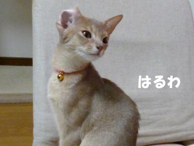 2011_03_25.jpg